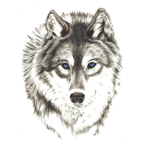 Shervin Akbari B2B Georg Sigeneger - Wolf