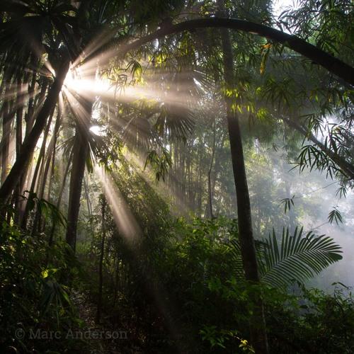 Hornbills & Gibbons - Kaeng Krachan National Park, Thailand