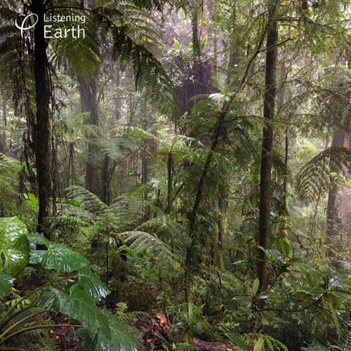 Soundscape : Huon Peninsula, Papua New Guinea