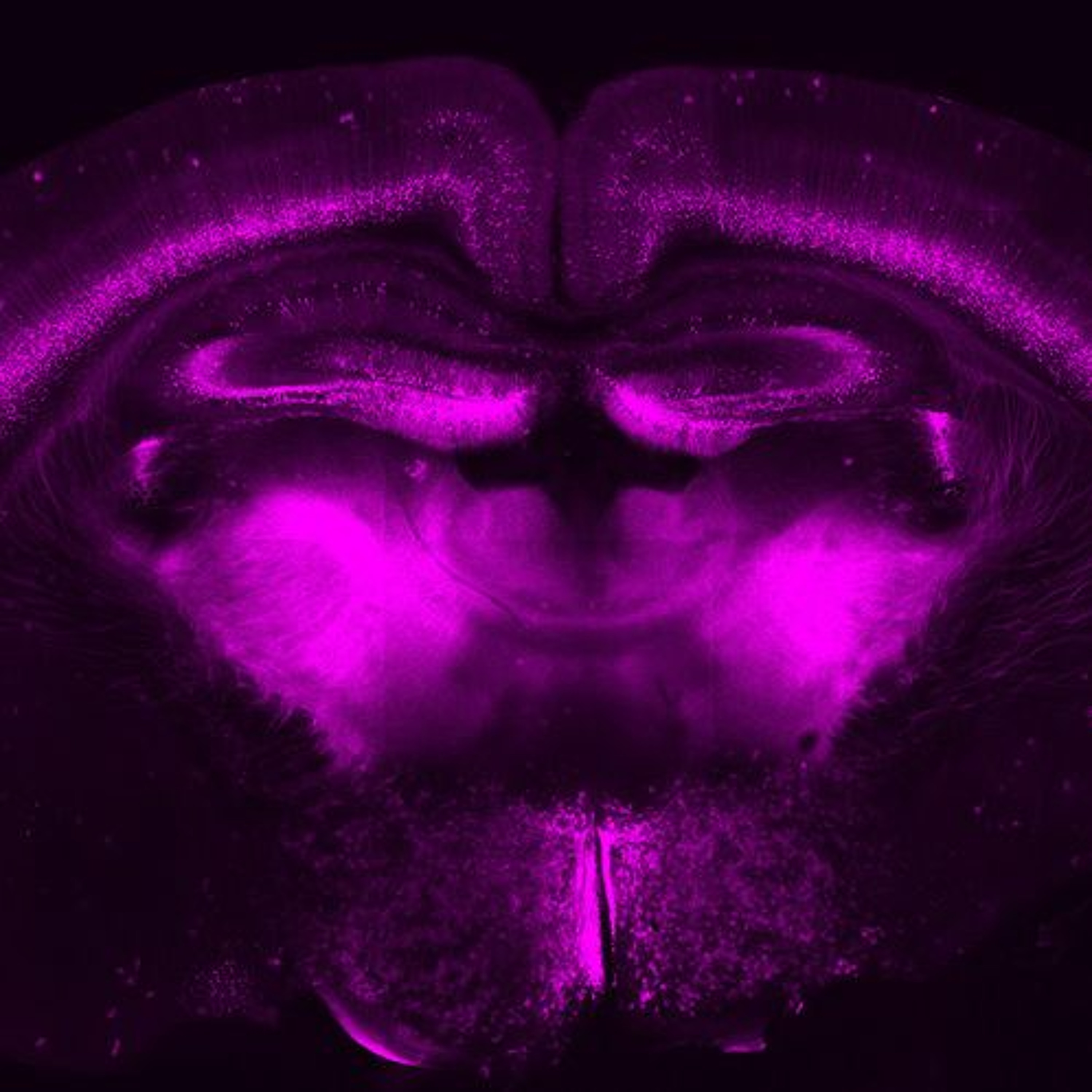 Mapping the great unknown of our brain