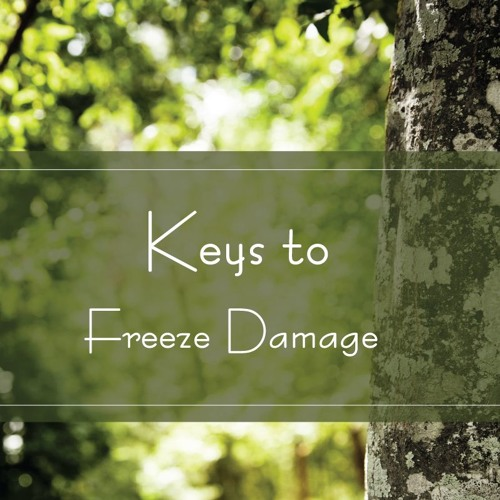 Keys to Freeze Damage
