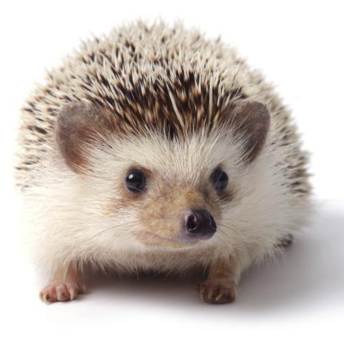 The Hedgehog's Dilemma (piano trio)