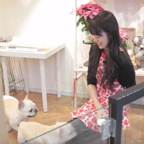 築夢新臺灣》日本女孩為愛犬留步台灣