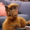 Alf Theme Cover