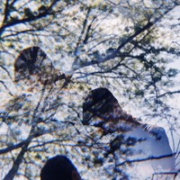 Cale Hawkins - Deep Dream