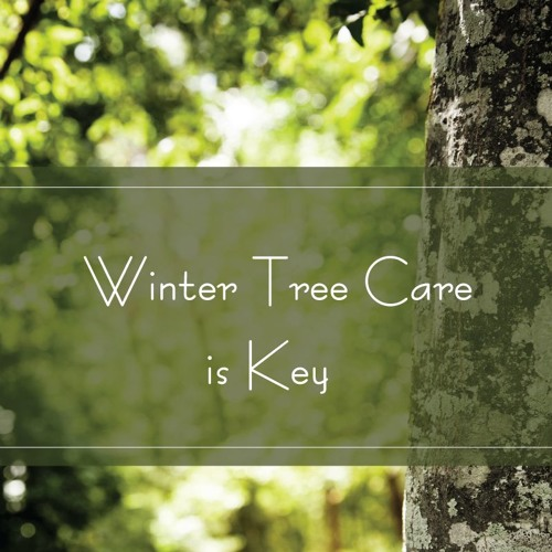 Winter Tree Care Is Key