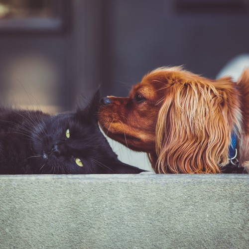 3 Tips for Animal Communication