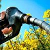 Biocombustibles: el futuro energético