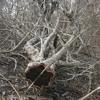 Music Tree Part 2