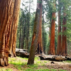 Late Summer Dawn in the Sequoias
