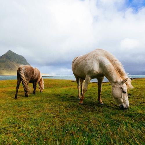 Mustang Herd Management - LJ Robertson