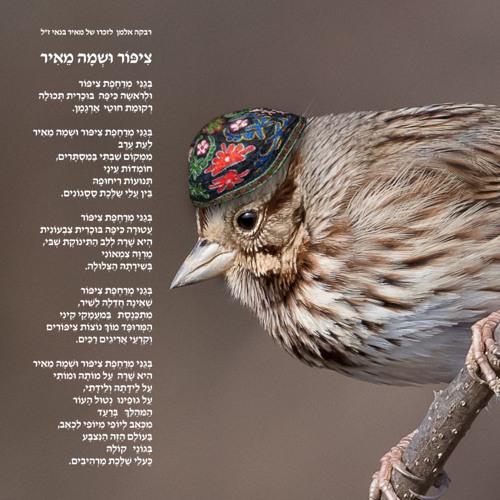 Bird Called Meir