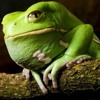Thinking Out Frog
