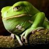 Frog It Still