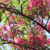 Sounds Of Nature - Birdies Singing (1 Hour) - For Relaxation, Meditation , Sleep Or Study