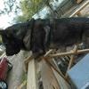 y2mate.com - chikis_rax_richar_ahumada2_lokos_del_barrio_video_oficial_quTQ9EJDVek.mp3 Portada del disco