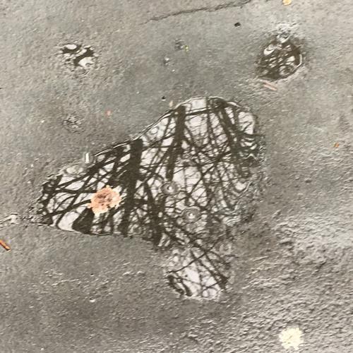COLLAB FEB #2: Salamandir