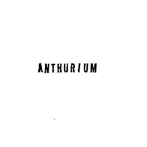 Anthurium - Excerpt Side B