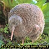 Download it is currently real kiwi hours Mp3