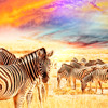 [CREATIVE COMMONS MUSIC] CHEERFUL PEACEFUL FLUTE NATURE ANIMAL DOCUMENTARY SEQUENCE CUE 007