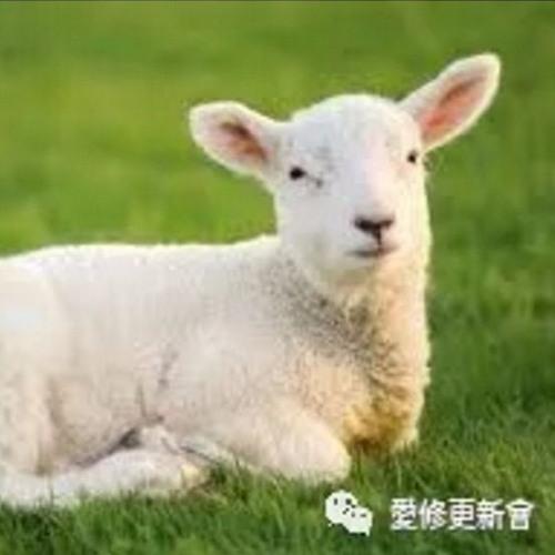 02.12 沉默的羔羊 (马太福音 27 : 1-37)