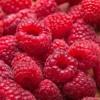 Fruit Fear