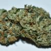 Online Medical Weed Dispensary