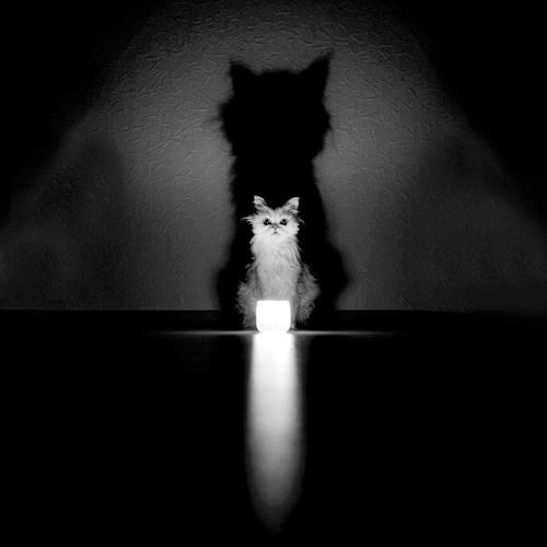 ADVEIS - Flashing Cats