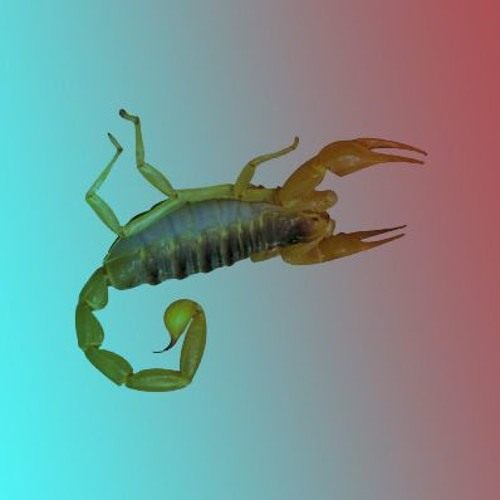 coeur-poignée-de-main-oeil-scorpion