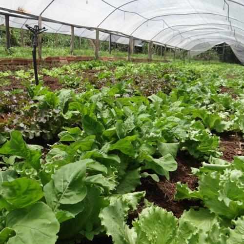 Agroecologia envolve mais do que apenas produzir, defende agricultor