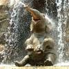 Walking With Elephants ( Ten Walls)