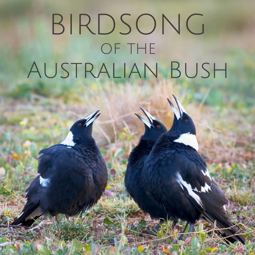 'Birdsong of the Australian Bush' - Album Sample