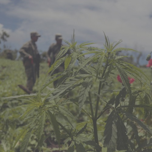 Episode 3: Historical Elements of the War on Drugs