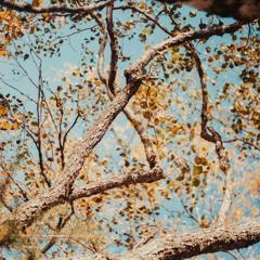 Olli Aarni – Ylitse 3