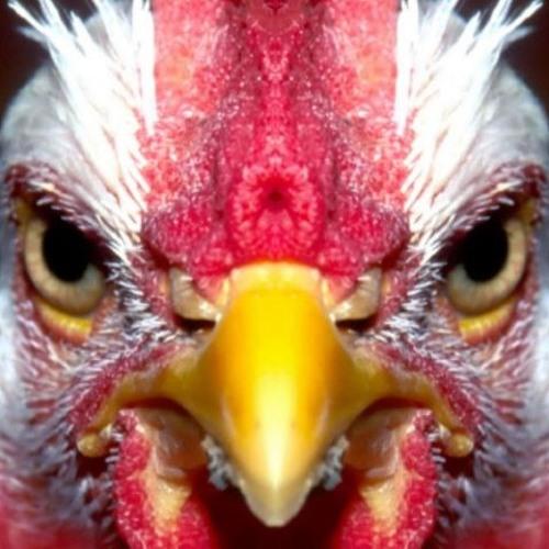 Ago Niglas - Kassa tegid selle kana ise vää?!