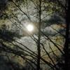 Moonlight Groove