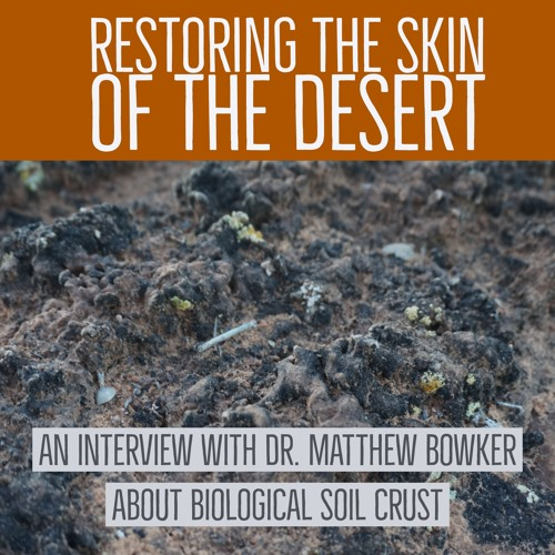 Restoring the skin of the desert
