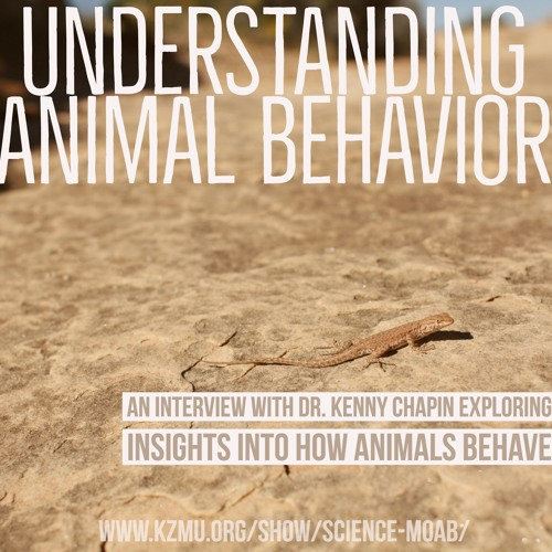 Understanding how animals behave