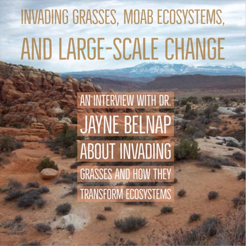 Invading grasses, Moab ecosystems, & large-scale change
