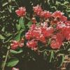 gnash - ilusm (mezu remix ft. inverness)