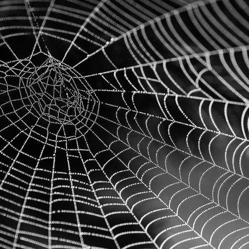 """Spinning the Web"""