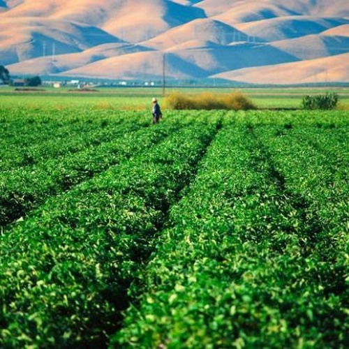 Food for Thought: How Immigration Issues Are Affecting California's Food