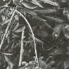 PREMIERE: Nacieae -001.1 [Tact Recordings]