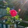 Le bouquet de fleurs de Ginette.MP3