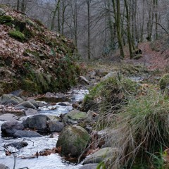Creek and Birds