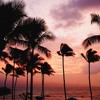 XXXTENTACION - Palm Trees ft. Jajfaru & Nyora Spouse