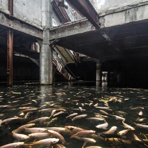 basement freak torpedo fish - Howtofishacashmoneyband.ish x