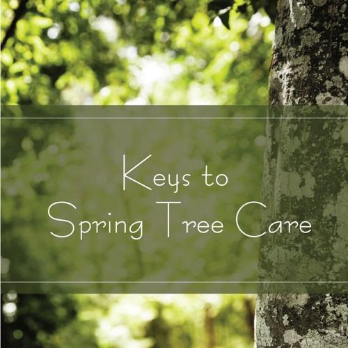 Keys to Spring Tree Care