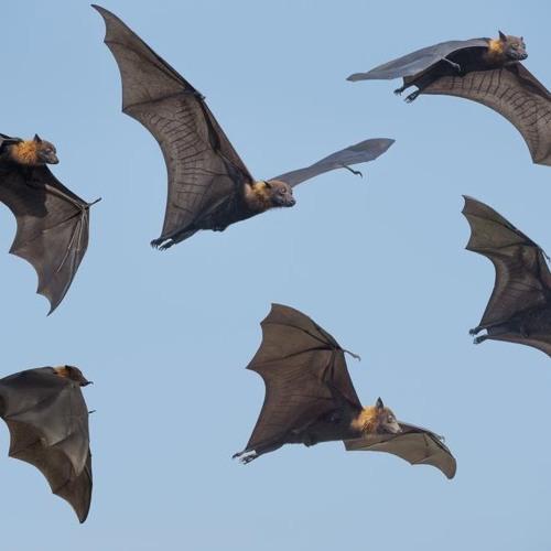Quem tem medo de morcegos?