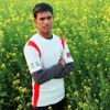 Ek_Tha_Tiger_Jaaniya /SHELENDRA SINGH